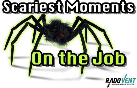 Crawlspace Spider